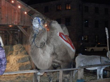 Camel in Nürnberg